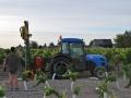 Plantation des nouvelles vignes pour le vin blanc