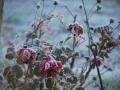 En hiver, au repos